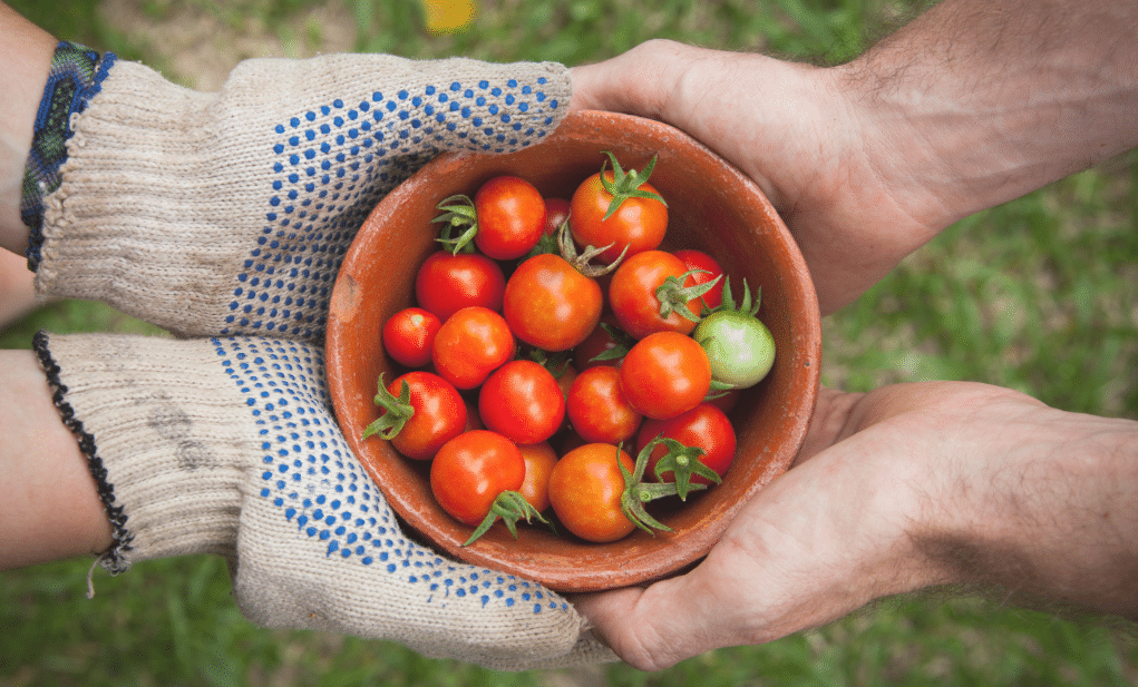 西红柿在手中