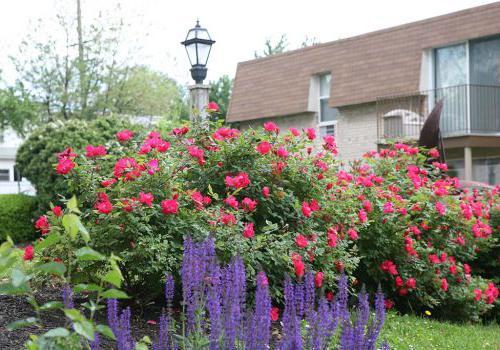 宾夕法尼亚州诺里斯敦450套绿色bbin外的花园,开着粉红色和紫色的花
