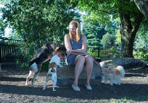 一名女子在宾夕法尼亚州阿宾顿的罗斯戴尔bbin里和三只狗玩耍